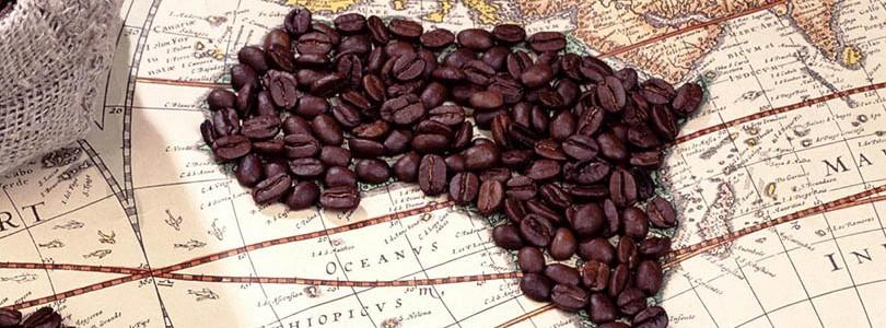 Türkiye'de Kahve Yetişir mi ?